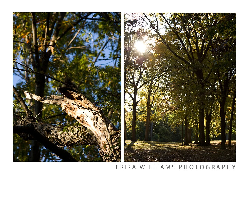 Erika Williams Photography, Pg. 5 by Erika Williams