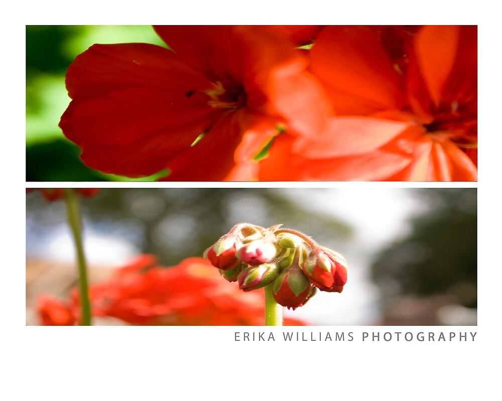 Erika Williams Photography, Pg. 9 by Erika Williams
