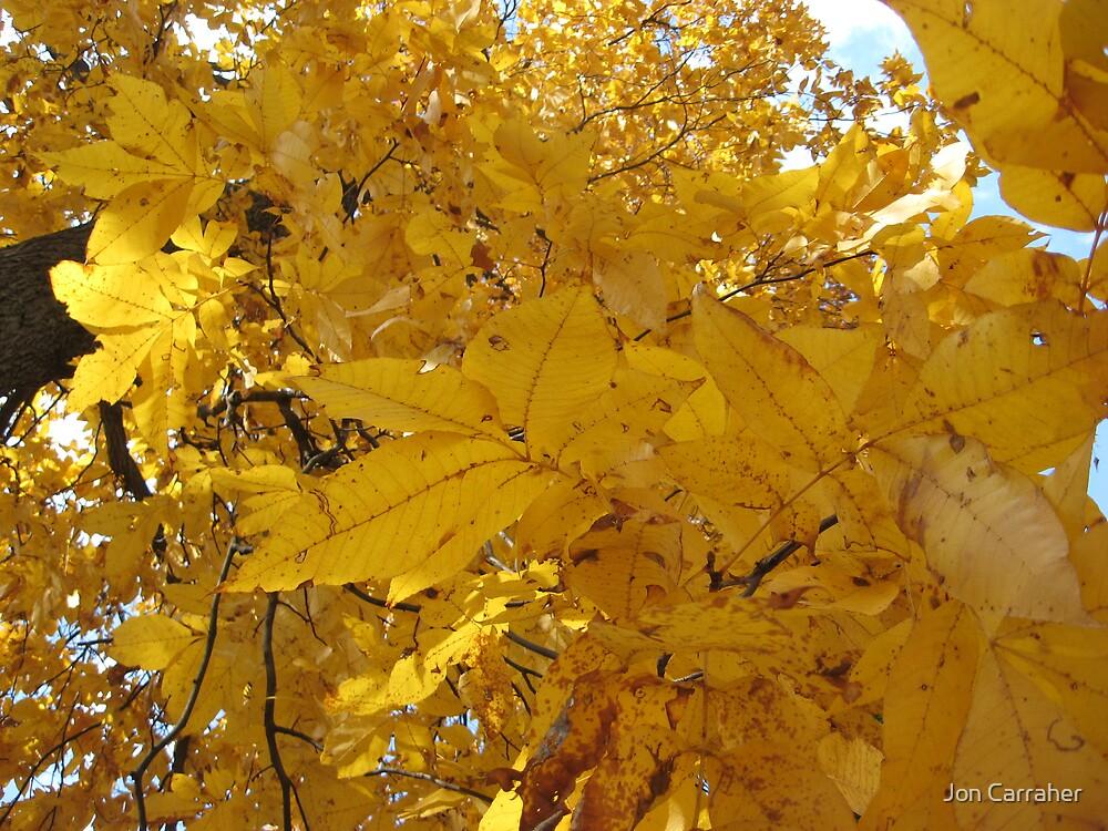 Fall 2 by Jon Carraher