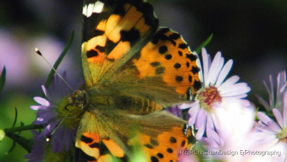 Butterfly Closeup by R&PChristianDesign &Photography