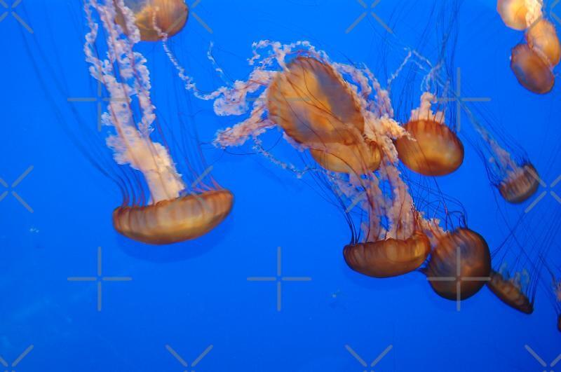 Blue background of jellyfish by loiteke