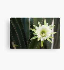 Princess of the Night - Blooming with Bee Metal Print