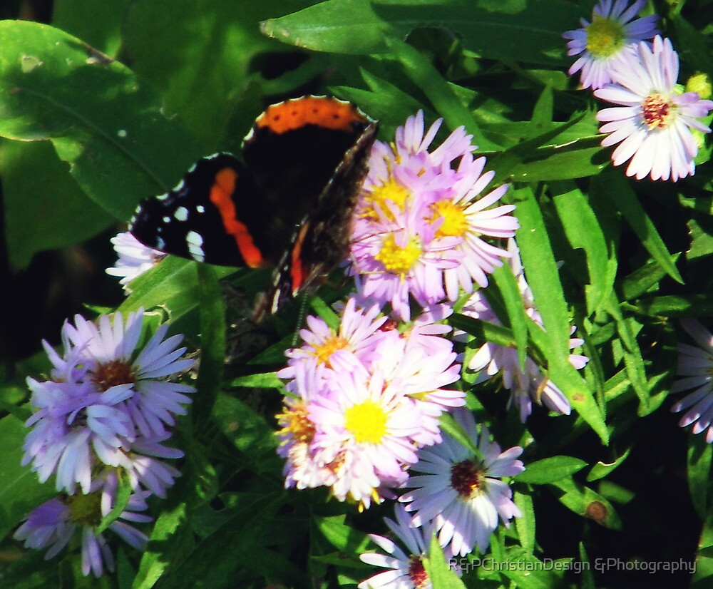 Autumn Flowers And Butterflys by R&PChristianDesign &Photography