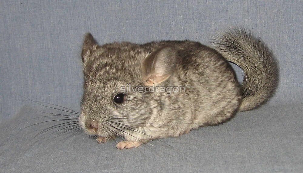 Standard Grey Chinchilla Kit by silverdragon