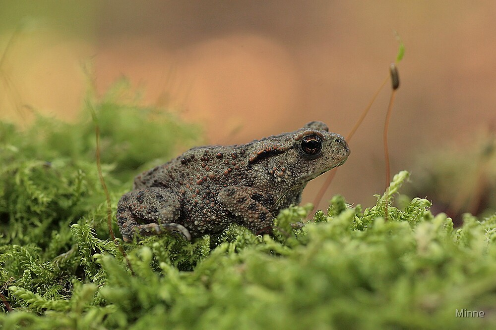 Toad by Minne