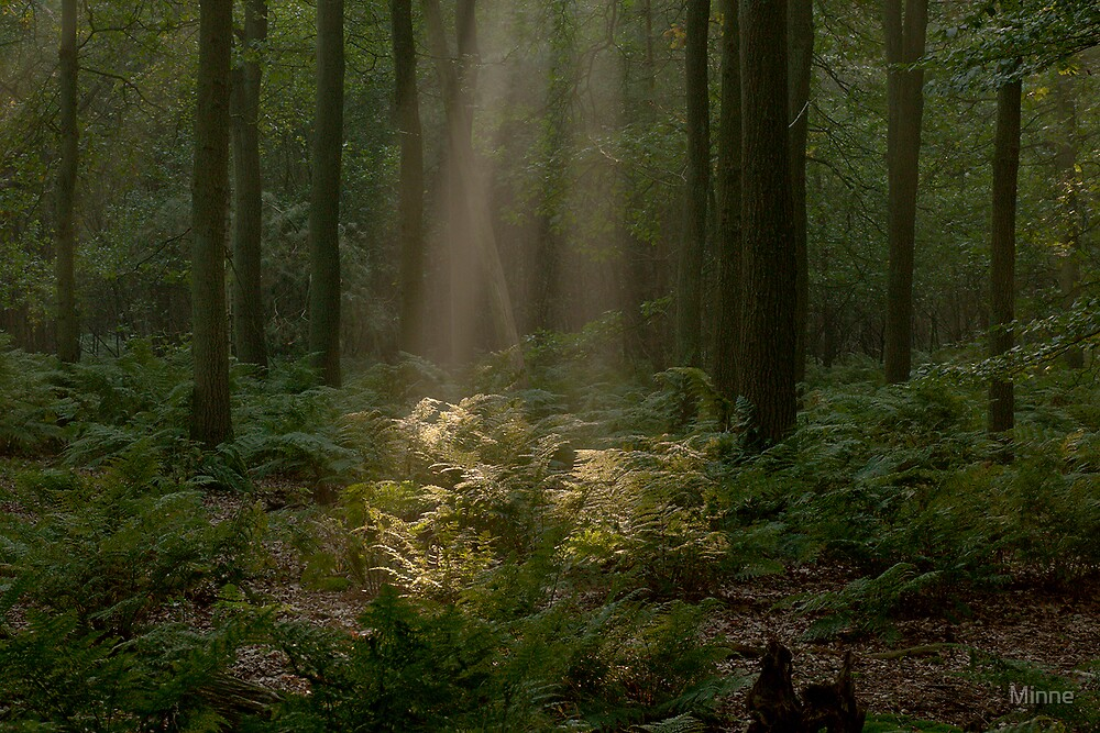 Sunlight in the forest by Minne