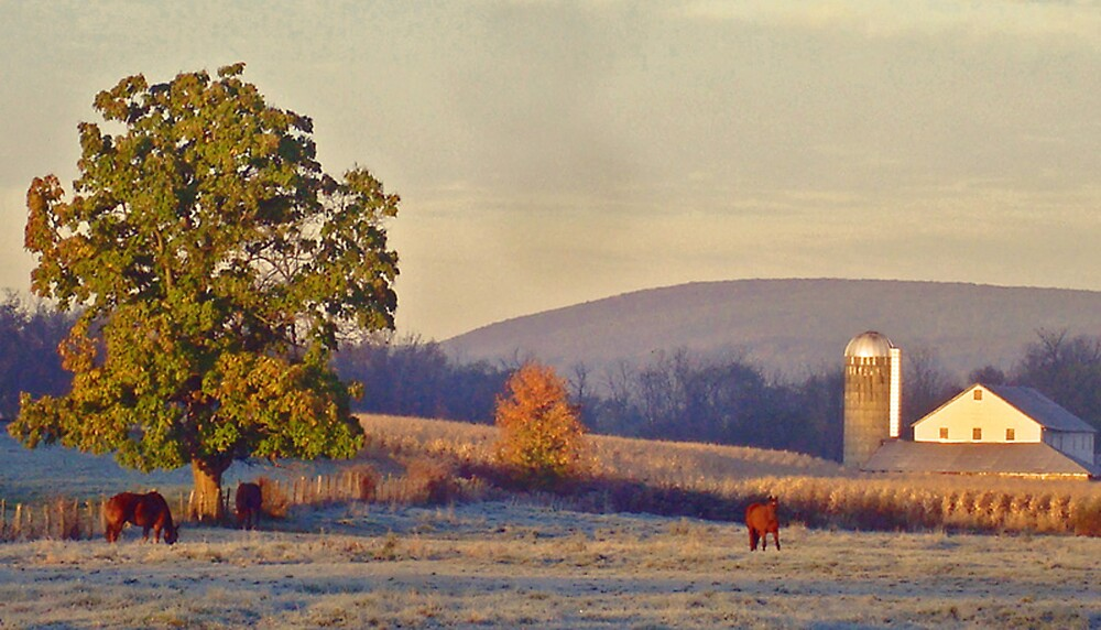 Frosty Morning by tinmar