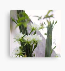 Princess of the Night - Blooming in Abundance Metal Print