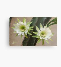 Princess of the Night - Twin Blooms with Bees Metal Print