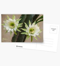 Princess of the Night - Twin Blooms with Bees Postcards