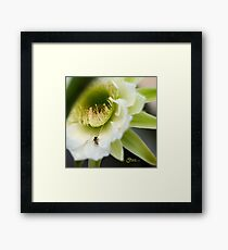 Princess of the Night - Bloom Close Up  Framed Print