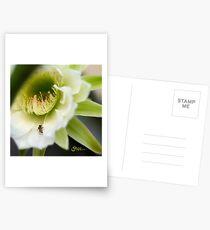 Princess of the Night - Bloom Close Up  Postcards
