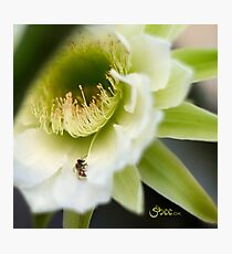 Princess of the Night - Bloom Close Up  Photographic Print