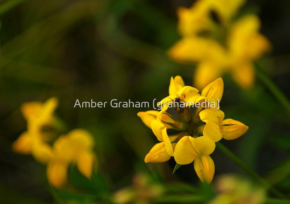 Starshine Blossoms by Amber Graham (grahamedia)