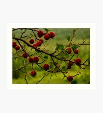The Apple Tree Art Print