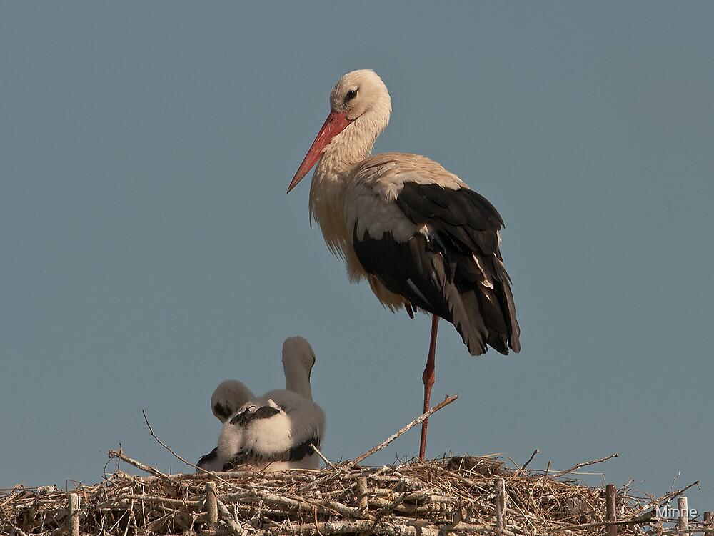Stork by Minne