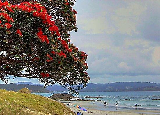 New Zealand Christmas tree at Tawharanui, New Zealand......!!  by Roy  Massicks