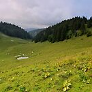 Alpine meadow on Grand Cret d'Eau mountain by Patrick Morand