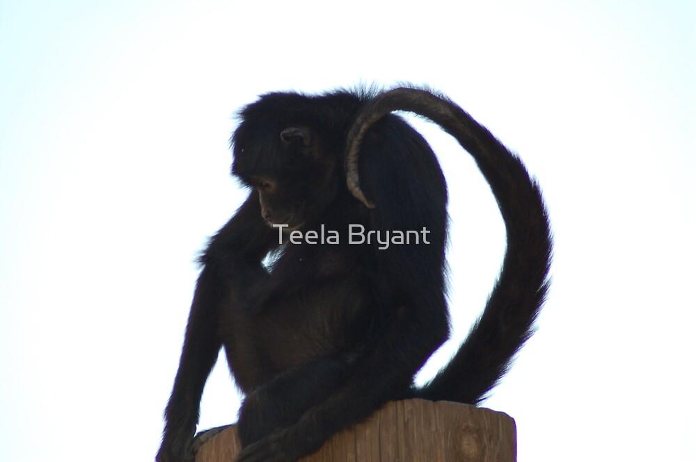 Monkey by Teela Bryant