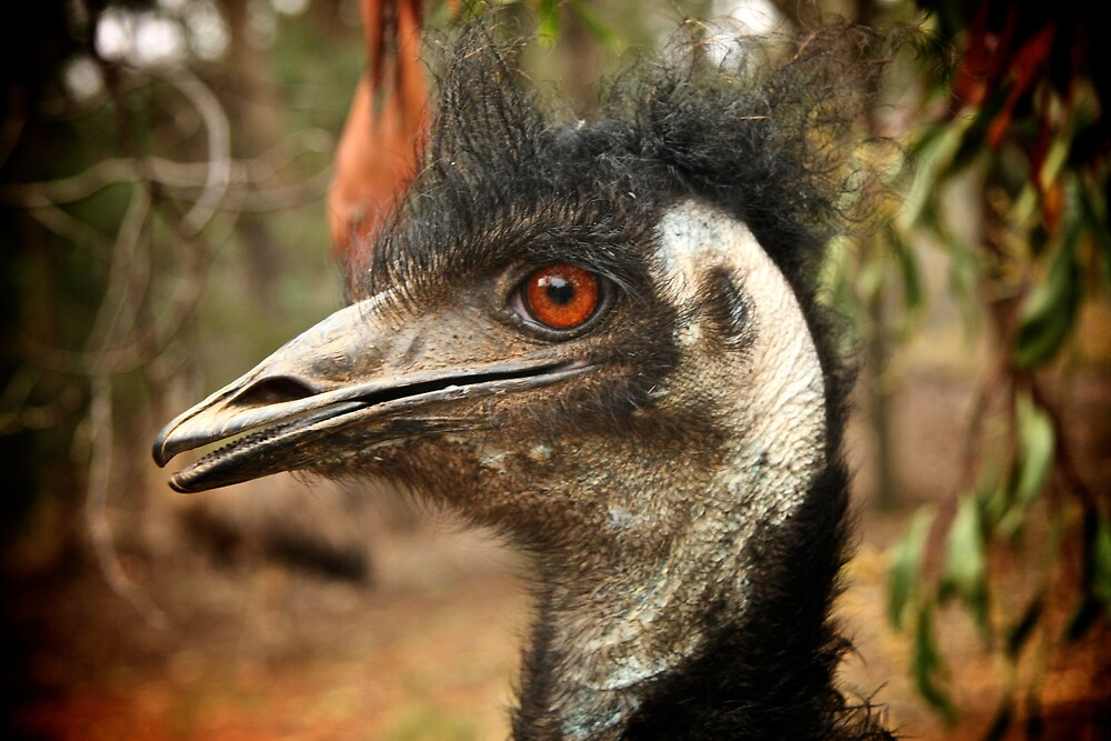 Emu by askegg