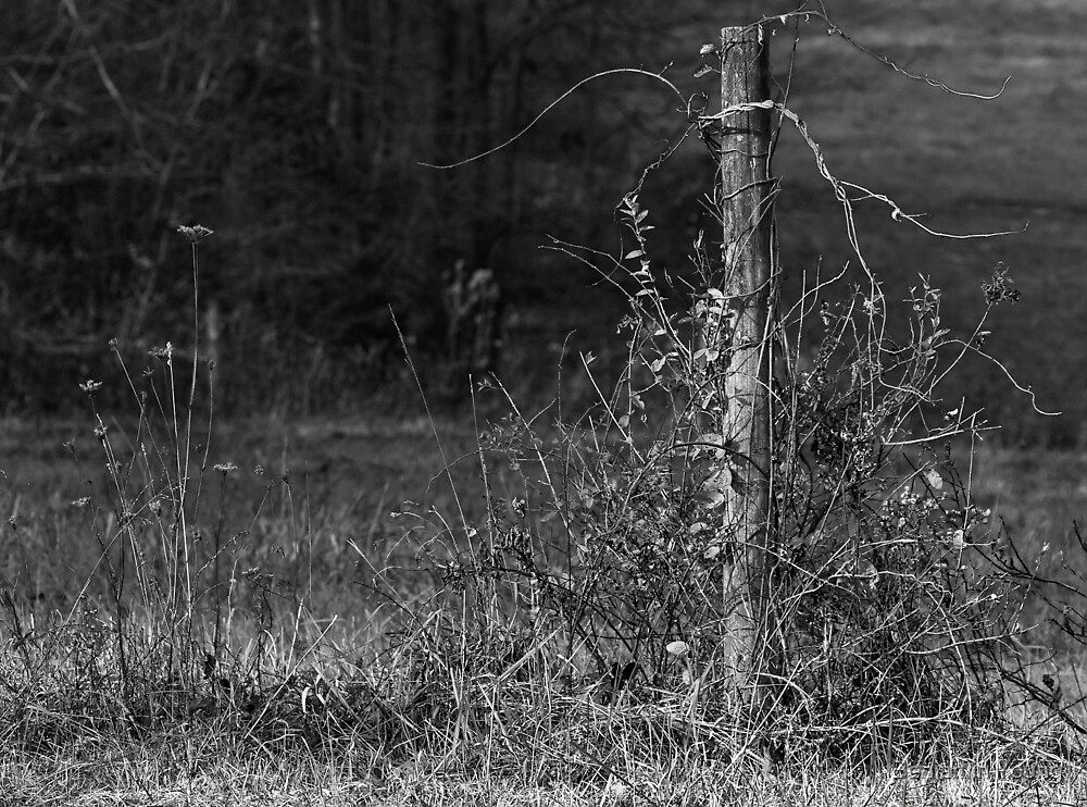 Standing Alone... by Benjamin Young