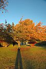 Perspective on Autumn by Paul Gitto