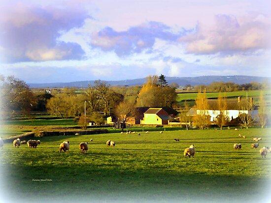 Sheep in the Field by Charmiene Maxwell-Batten