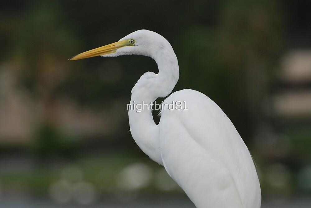White Bird by nightbird81