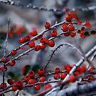 Cold by Pamela Hubbard
