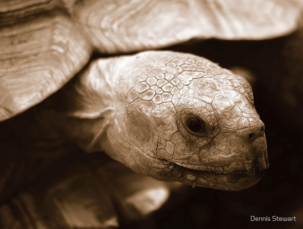 Old Man Tortoise by Dennis Stewart