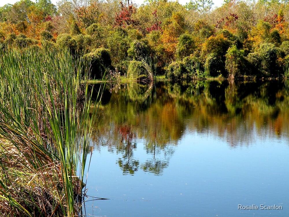 Florida Fall Reflections by Rosalie Scanlon