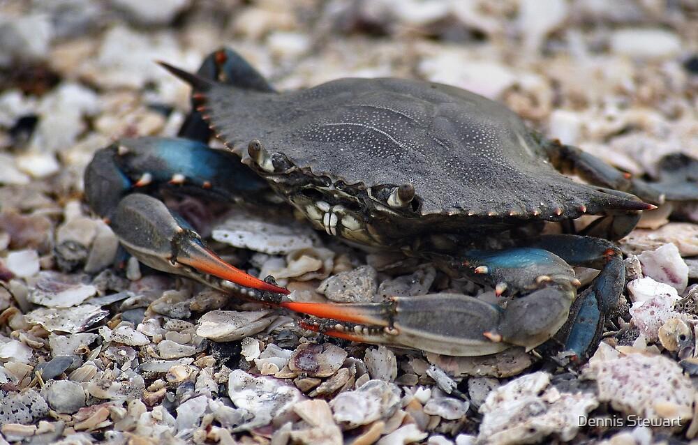 Crab by Dennis Stewart
