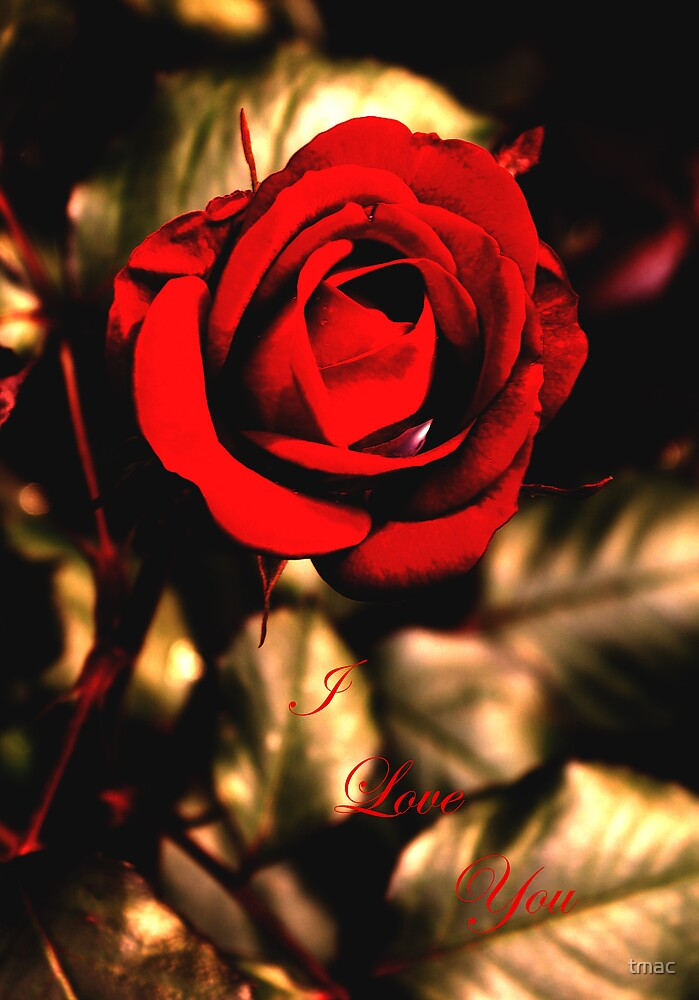 I Love You Rose by tmac