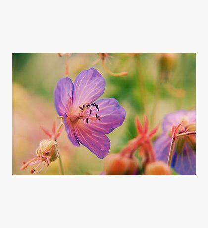 Violet  Fleurs  Photographic Print