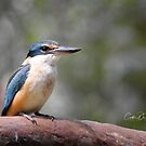 Sacred Kingfisher by caths13