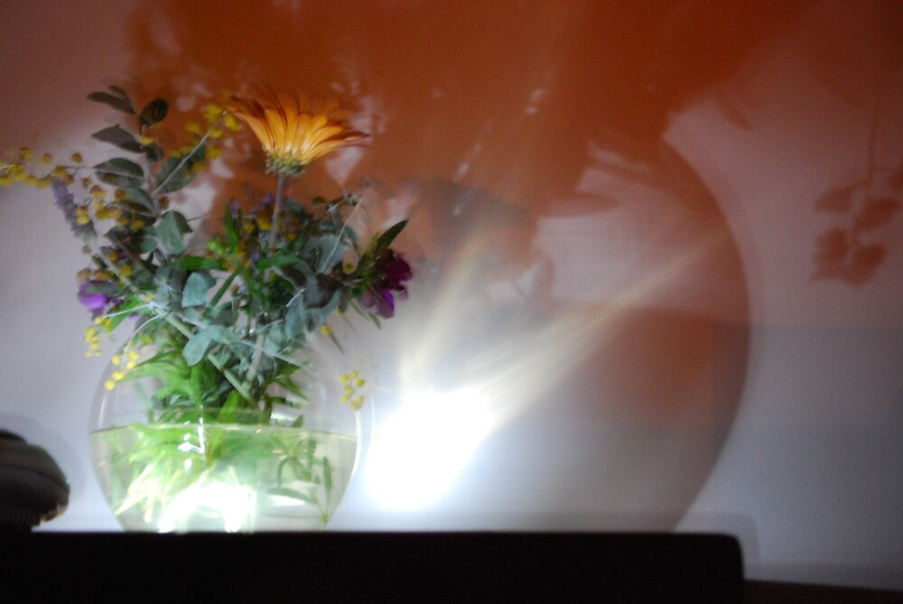 shadows of our feelings. by alyssa naccarella