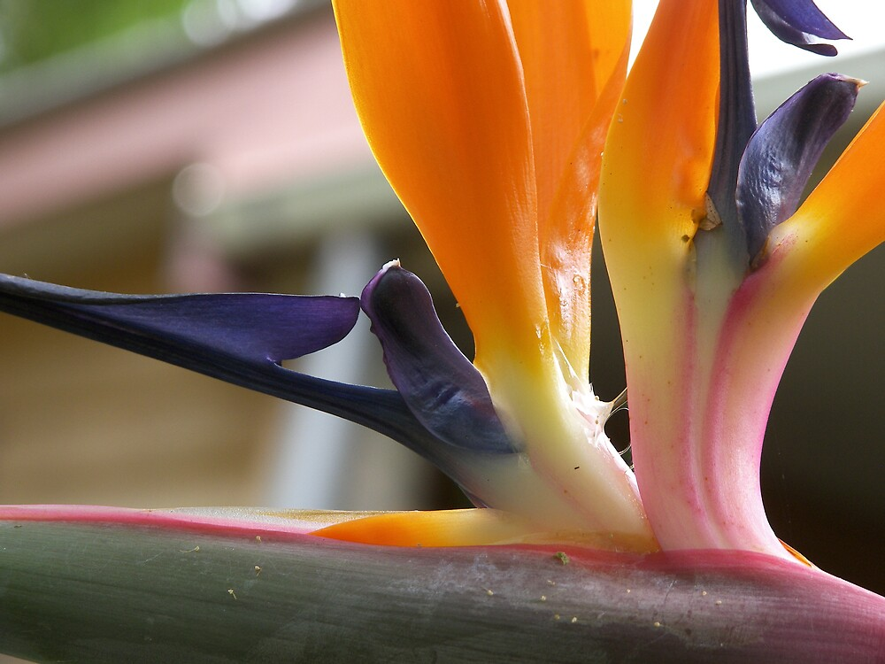Bird of Paradise by tinyteddy2