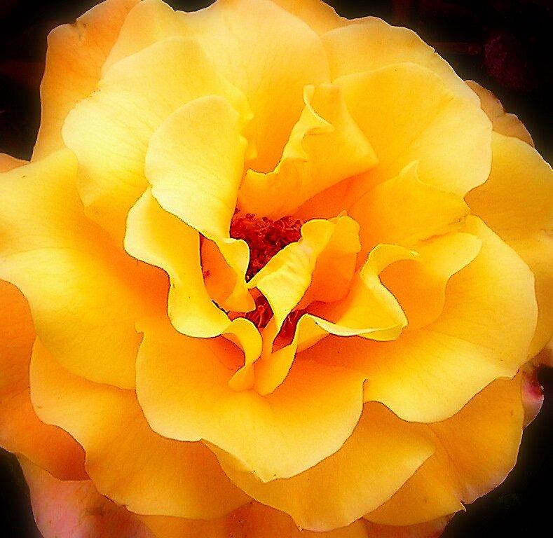 Bloomin Beautiful 1 by sarah bragg