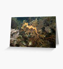 Leafy Sea Dragon - Wool Bay Greeting Card