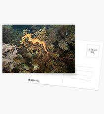 Leafy Sea Dragon - Wool Bay Postcards
