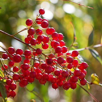 Berry Nice by LindaLees