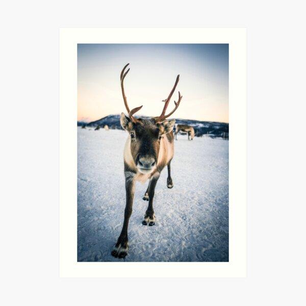 Artic Reindeer Art Print