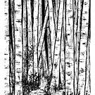 Birch tree forest by eleni dreamel