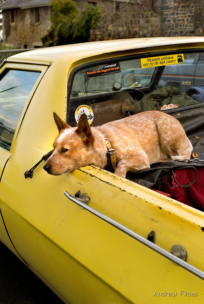 RED DOG, YELLOW UTE by Andrew  Fildes