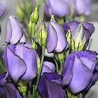 Purple Bouquet by Alexandra Lavizzari