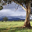 Framed tree view by Joel McDonald