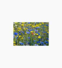 Blue Cornflowers and Yellow Daisies Art Board Print