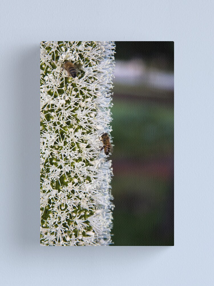 Alternate view of Grasstree flower with bees Canvas Print