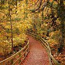 Autumn pathway by Maureen Brittain