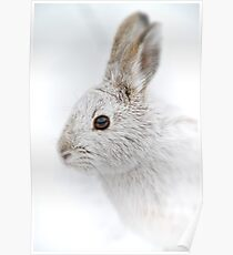Showshoe Hare Poster